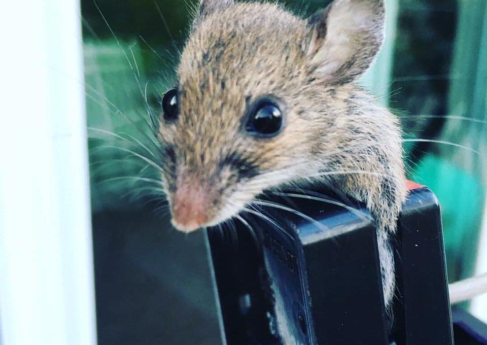 War against Mice